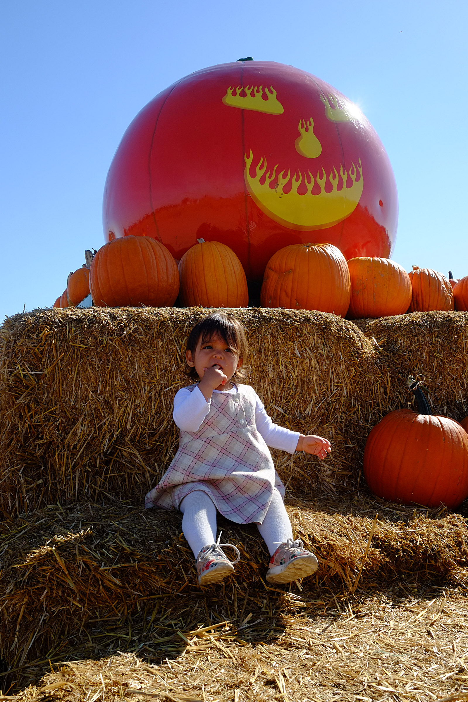 Moomin @ Uncle Ray's Pumpkin Patch