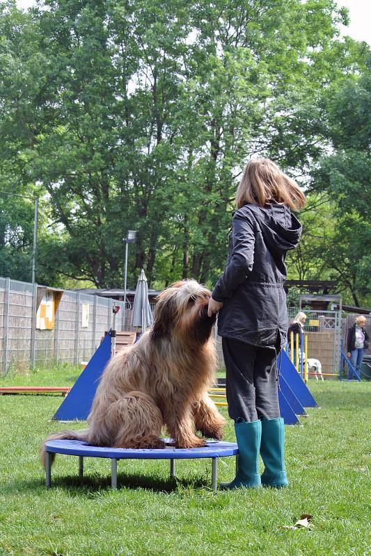 Eloise trampoline