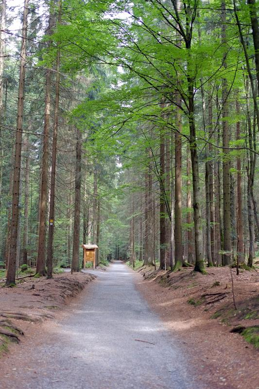 Bavarian Forest National Park 1