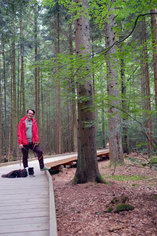 Bavarian Forest National Park 2