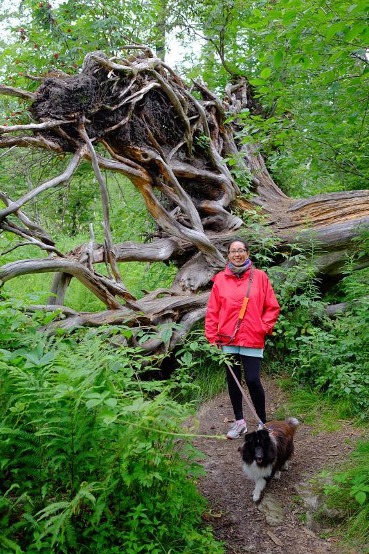 Bavarian Forest National Park 4
