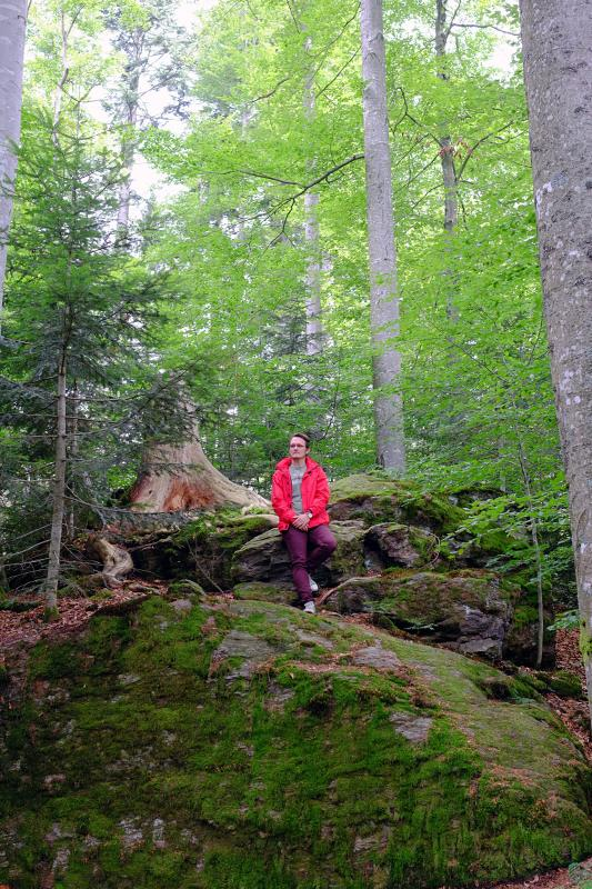 Bavarian Forest National Park 5