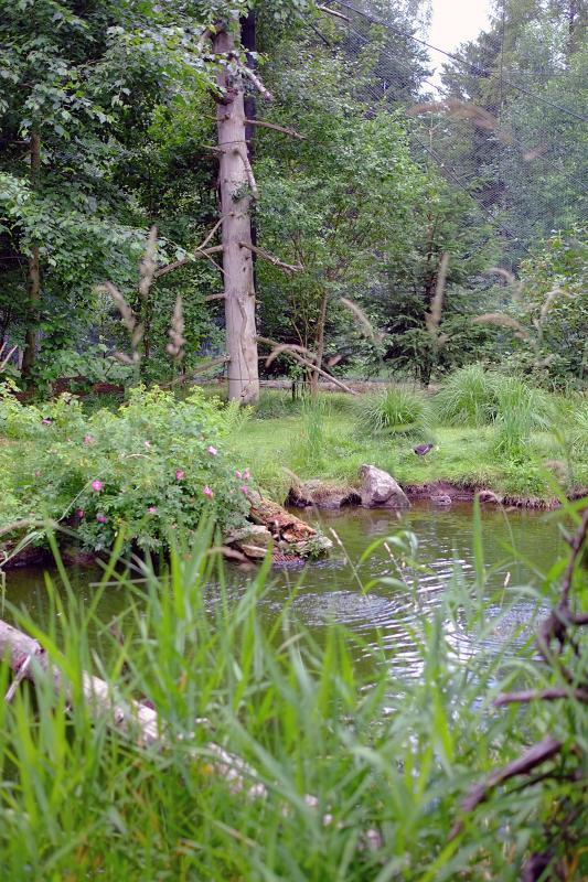 Bavarian Forest National Park 6