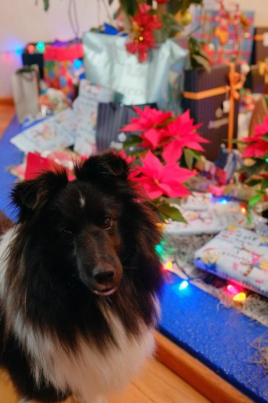 Lola at christmas
