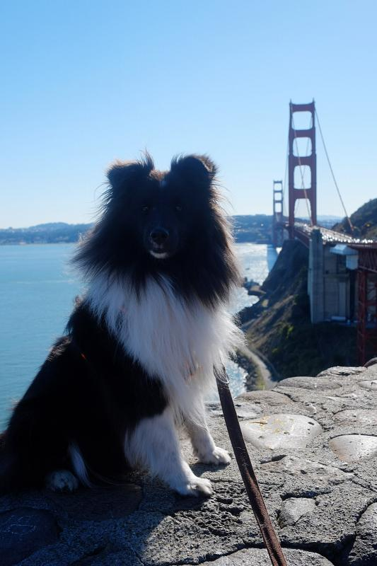 Lola in San Francisco