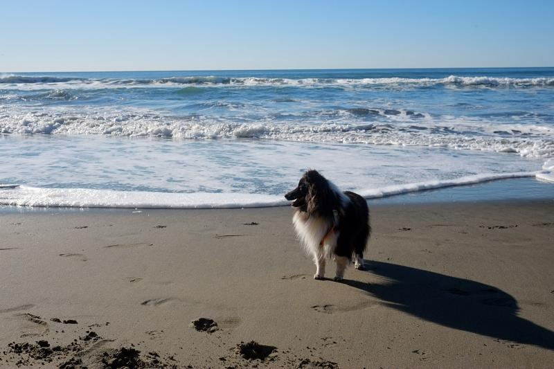 Lola at the beach