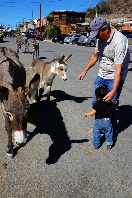 Moomin + Donkeys